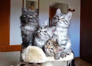 Photo: Salem, Shiva, Segovax y Snow