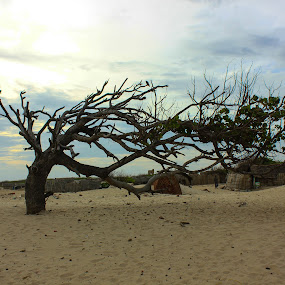 Tree by Karthic Kumar - Nature Up Close Trees & Bushes ( tree )