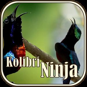Download Master Burung Kolibri Ninja Apk Latest Version For Android