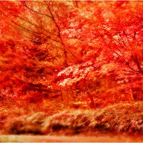 path in red  ,, by Arnetta Rachma - Landscapes Forests