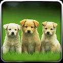 Pet Dog Simulator-Puppy Game icon