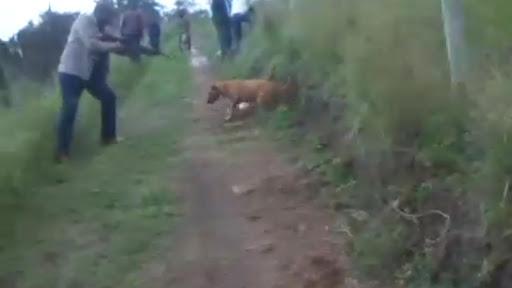 KZN deputy mayor, bodyguard found guilty of shooting dog