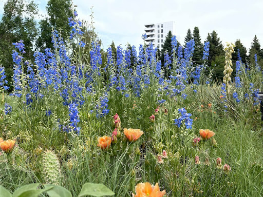 Lovely larkspurs and a rustic rest stop