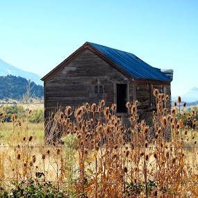 Taleholt all alone by Sherry Gardner - Buildings & Architecture Decaying & Abandoned ( tailholt, little shasta valley )