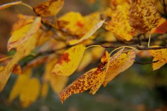 Photo: Fall in the Blue Ridge Mountains