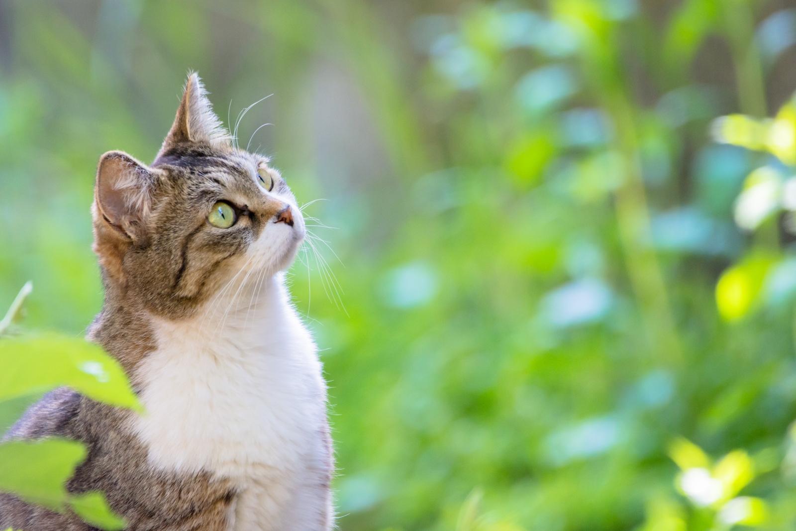 Photo: 「気になる感じ」 / I am curious about.  なんだろう 気になりだしたら止まらない 知りたい知りたい とっても気になる  Stray cat. (ノラ猫)  Nikon D7200 SIGMA 150-600mm F5-6.3 DG OS HSM Contemporary  #cat #straycat #猫 #kawaii #nikon #sigma #木曜ポートニャート #野良猫  ( http://takafumiooshio.com/archives/2472 )