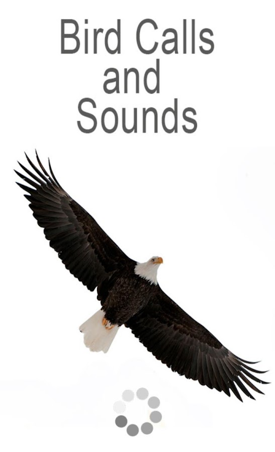 Bird Calls And Sounds Android Apps On Google Play