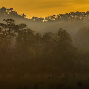 Sunset in the forrest by Natapong Paopijit - Landscapes Forests ( mountain, park, beautiful, twilight, forest, landscape, foggy, sky, season, tree, nature, fog, sunset, dramatic, scenery, view, natural, light, misty, mist )