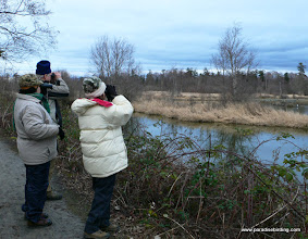 Photo: Winter birding at Reifel Bird Sanctuary, Ladner, B.C.