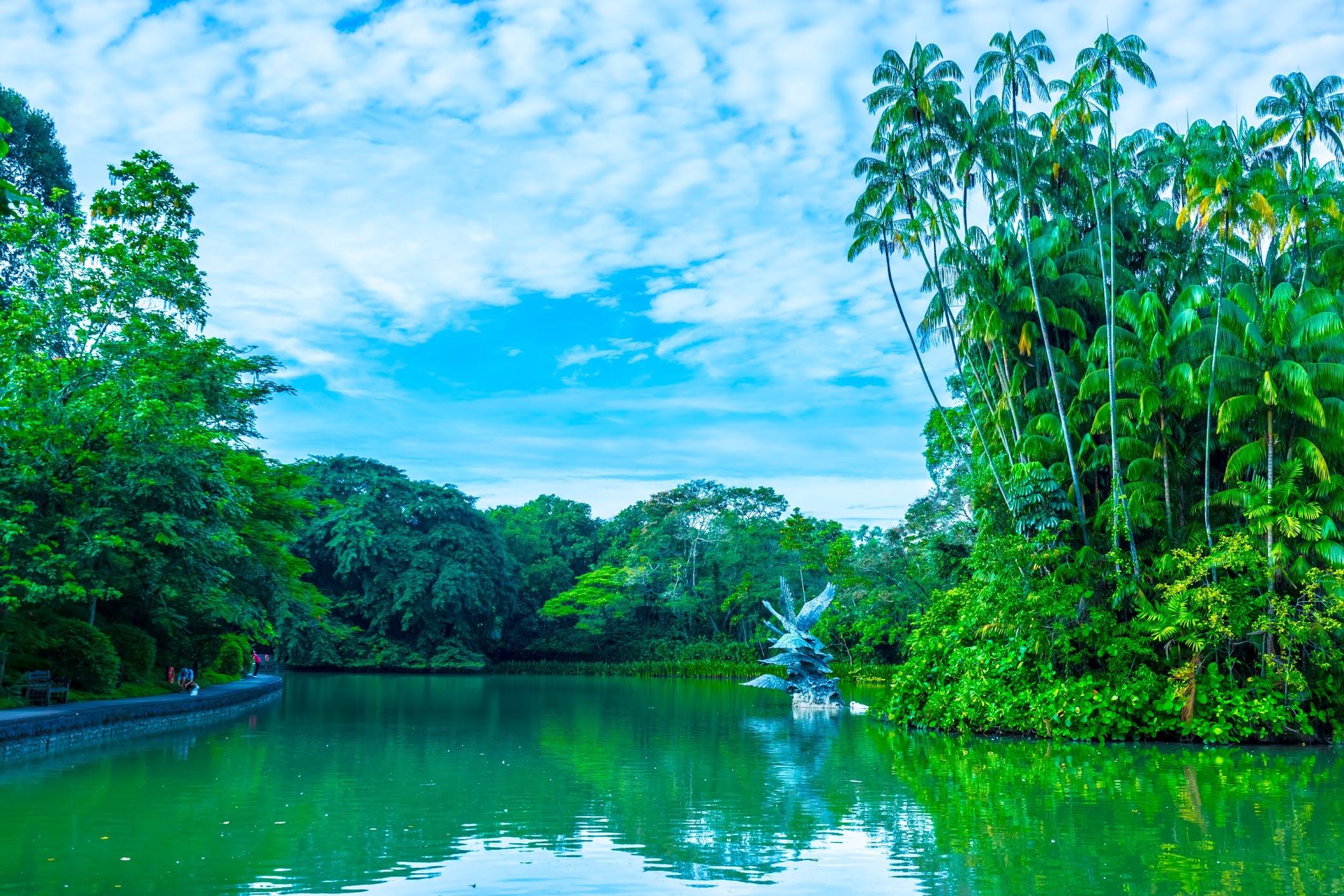 Singapore Botanic Gardens Swan Lake1