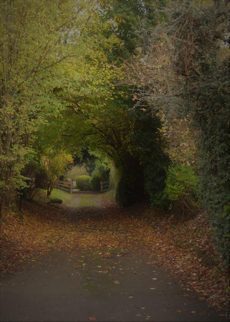 verde tunnel... in autunno.. di Andry_78