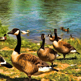 Wild Geese by Christy Leigh - Painting All Painting ( painitng, water, water fowl, fowl, ducks, geese, birds, pond )