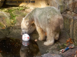 Photo: Oder doch lieber der Ball ?