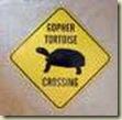 tortoise sign