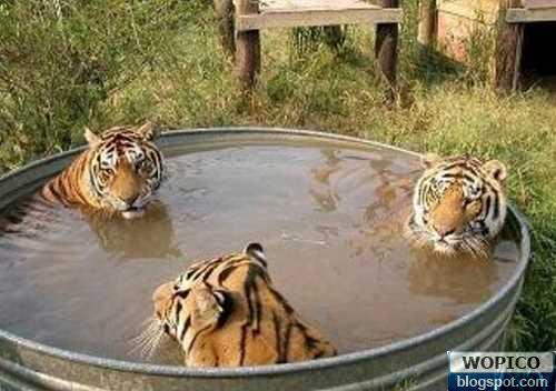Tigers Spa