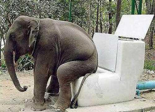 Toilet For Elephant