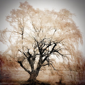 by Keri Zimmerman - Instagram & Mobile iPhone ( sepia, tree, branch, willow )