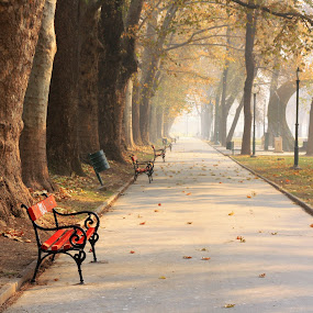 Autumn  by Emil Chuchkov - City,  Street & Park  City Parks ( cuckove canon autumn skopje macedonia park )