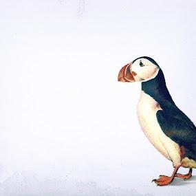 Puffin by Kristján Karlsson - Illustration Animals