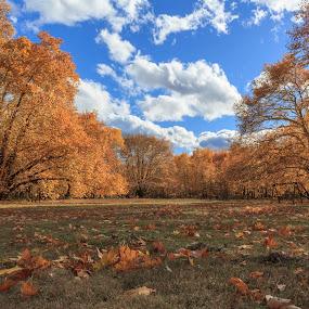 December's colour by Baggelis Karaliolios Zerofive - Landscapes Forests