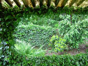 Photo: Naturgarten Düsseldorf Lohausen, das Efeu-Fenster