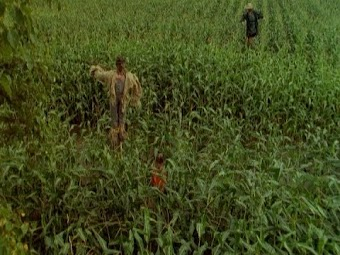 Scarecrow Walks at Midnight
