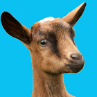 Buttermilk - The Bouncing Goat icon
