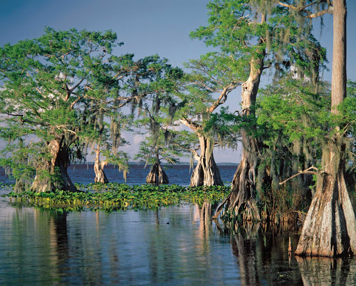 Trees-in-swamp.jpg - Tour the Southeast U.S. on American Cruise Lines and feel closer to nature.