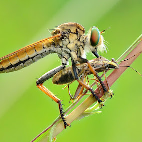 Eating by Vandie Ndie - Animals Insects & Spiders