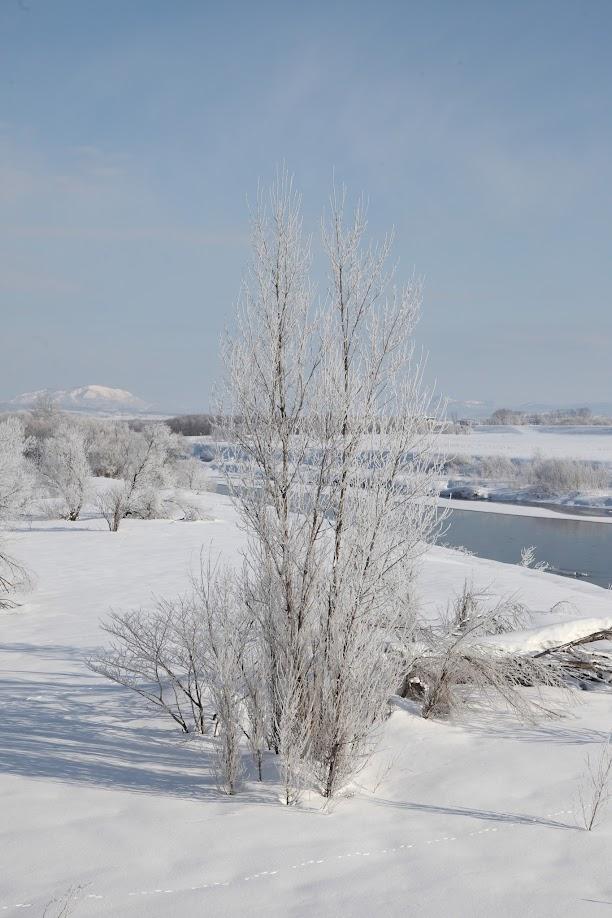樹氷(3)