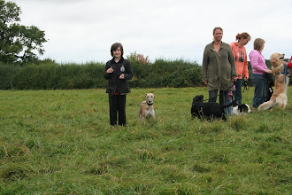 Photo: Lily with her best dog Henry Whippet, then Lorraine with Maggie-May Lab X, Holly with Billy Springer, LIsa with Ralph Labradoodle and in the furthest away standing two legged is Charlie Golden