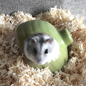 Hamster Slider Puzzle icon