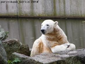 Photo: Warten auf die Fuetterung ;-)