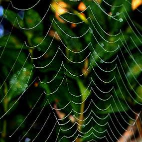 by Karen Harrison - Abstract Fine Art ( web, spiderweb,  )