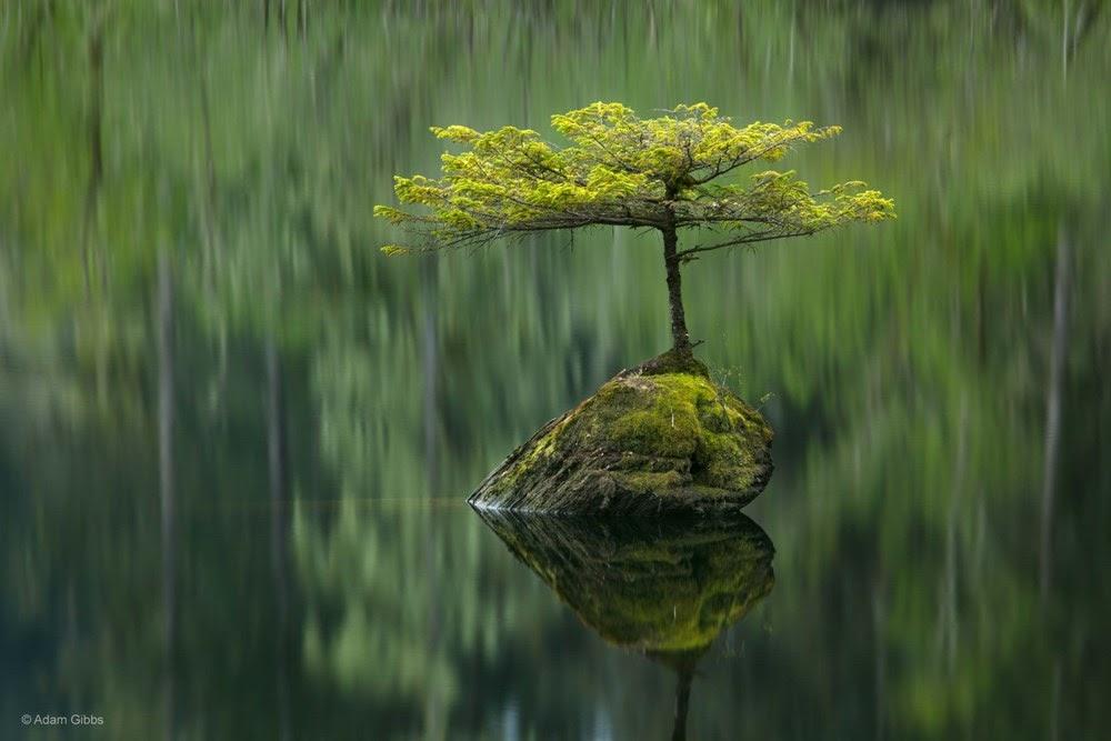 A pequena árvore do lago das fadas