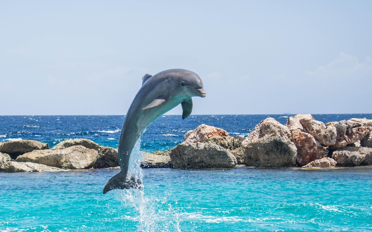 dolphin photo frames android apps on google play