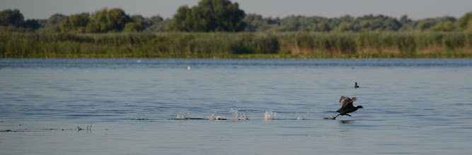 Photo: Danube delta, Romania