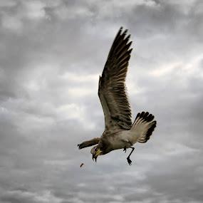 Gaviota by Nallely Martinez - Animals Birds ( gaviota, mar, vuelo,  )
