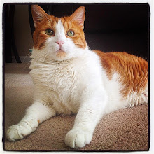 Photo: Mr. Tom, the Dreamer #intercer #cat #cats #catsofinstagram #pet #pets #petsofinstagram #portrait #orange #shorthair #white #eyes #ears #funny #pretty #beautiful #look #life #sweet #cool #paws - via Instagram, http://ift.tt/1GTAa66