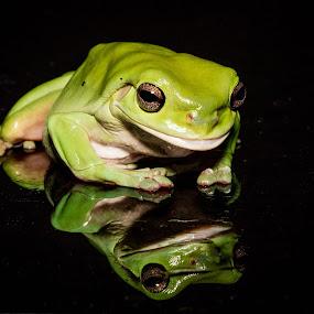 Green Frog by Gary Tindale - Animals Amphibians ( reflection, macro, frog, green, amphibian,  )