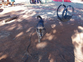Photo: Camp Site Watch Dog