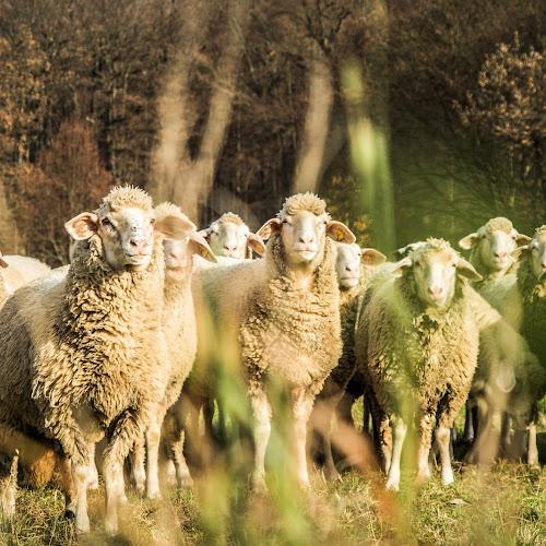 In het spoor van de herder