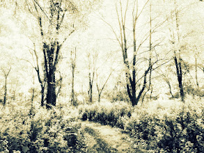 Photo: Gorgeous forest in infrared at Eastwood Park in Dayton, Ohio.