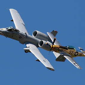by David  Clayton - Transportation Airplanes ( air show, jet, mustang, formation, a10 warthog,  )