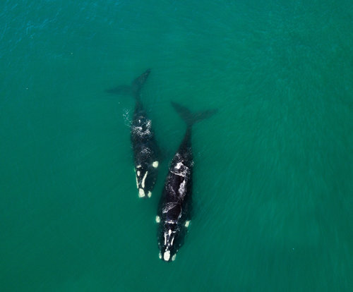 Southern ocean whales.