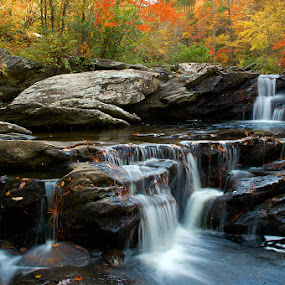 Devil's Den by Alabama Photos - Landscapes Forests