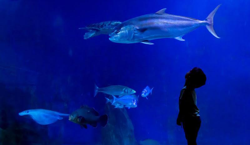 In fondo al mar di Klizio