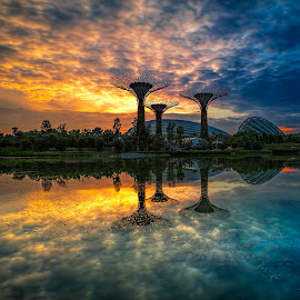 Rising Momentum! by Gordon Koh - City,  Street & Park  City Parks ( clouds, reflection, garden by the bay, park, colors, super trees, asia, dome, lake, sunrise, morning, pond, singapore )