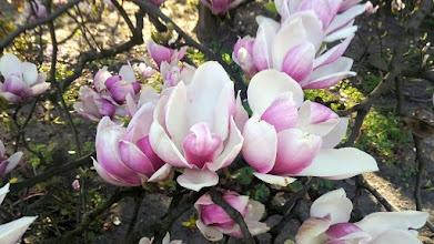Photo: F4233529 w Ogrodzie Botanicznym