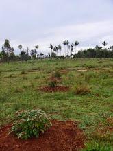Photo: Plantation saison des pluies 2008